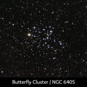 Scorpio Butterfly Cluster