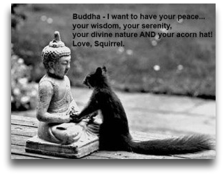 buddhism squirrel cartoon