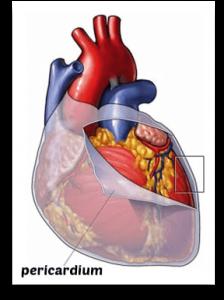 instrideonline.com hearth health post