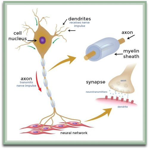 instrideonline.com health cns neurons