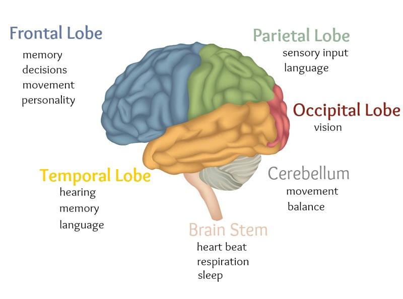 instrideonline.com health cns brain