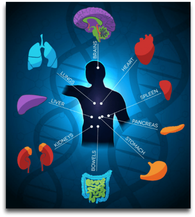 Health and parts of the body diagram clip art