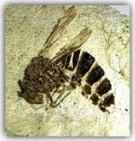 bee fossil news page-min