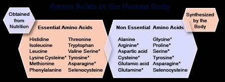 instrideonline.com health nutrition amino acids