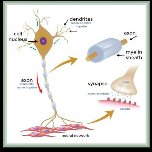 instrideonline.com health cns neurons